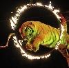 Цирки в Салтыковке